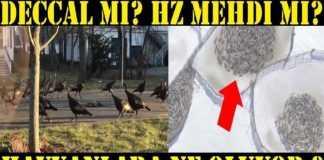 Hayvanlar Neden Dönüyor? Deccal ve Hz Mehdi