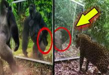 AYNALARDAKİ GİZEM! Hayvanların Ayna Yansımasına Verdiği Tepkiler